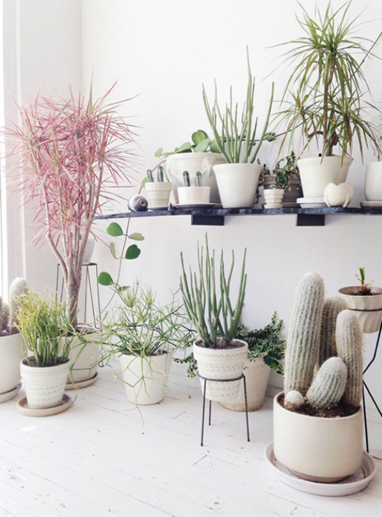 Plant Decoration In Living Room: It's Trending: 3 Ways Of Integrating