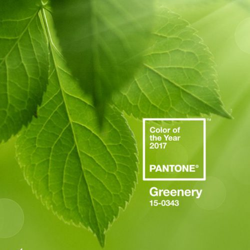 The Pantone Color of the year 2017 is out! It's GREENERY.