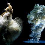 Artistic Synapses – Unpredictability