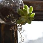 Travel treasures: Gardening trend at Liberty London