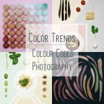 Trending: Colour coded photography
