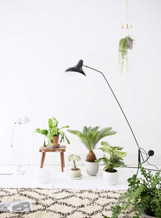 3 way of integrating plants in your home decor-Eclectic Trends