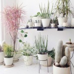 3 ways of integrating plants in your home decor
