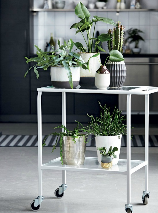 How to integrate plants in your home-Eclectic Trends