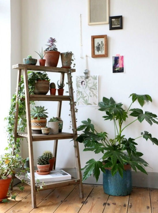 3 way of integrating plants in your home decor-Eclectic Trends for BOEN