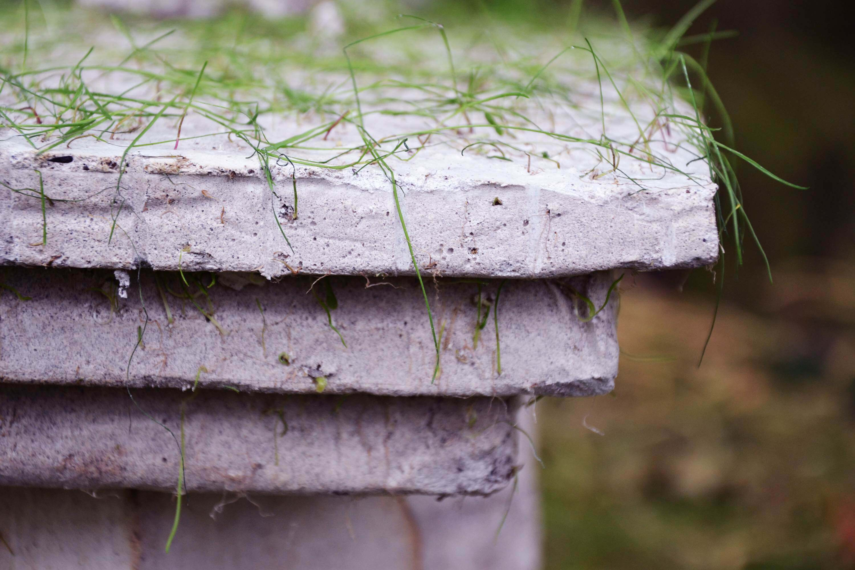 Ruins merging and growing back into nature | Eclectic Trends