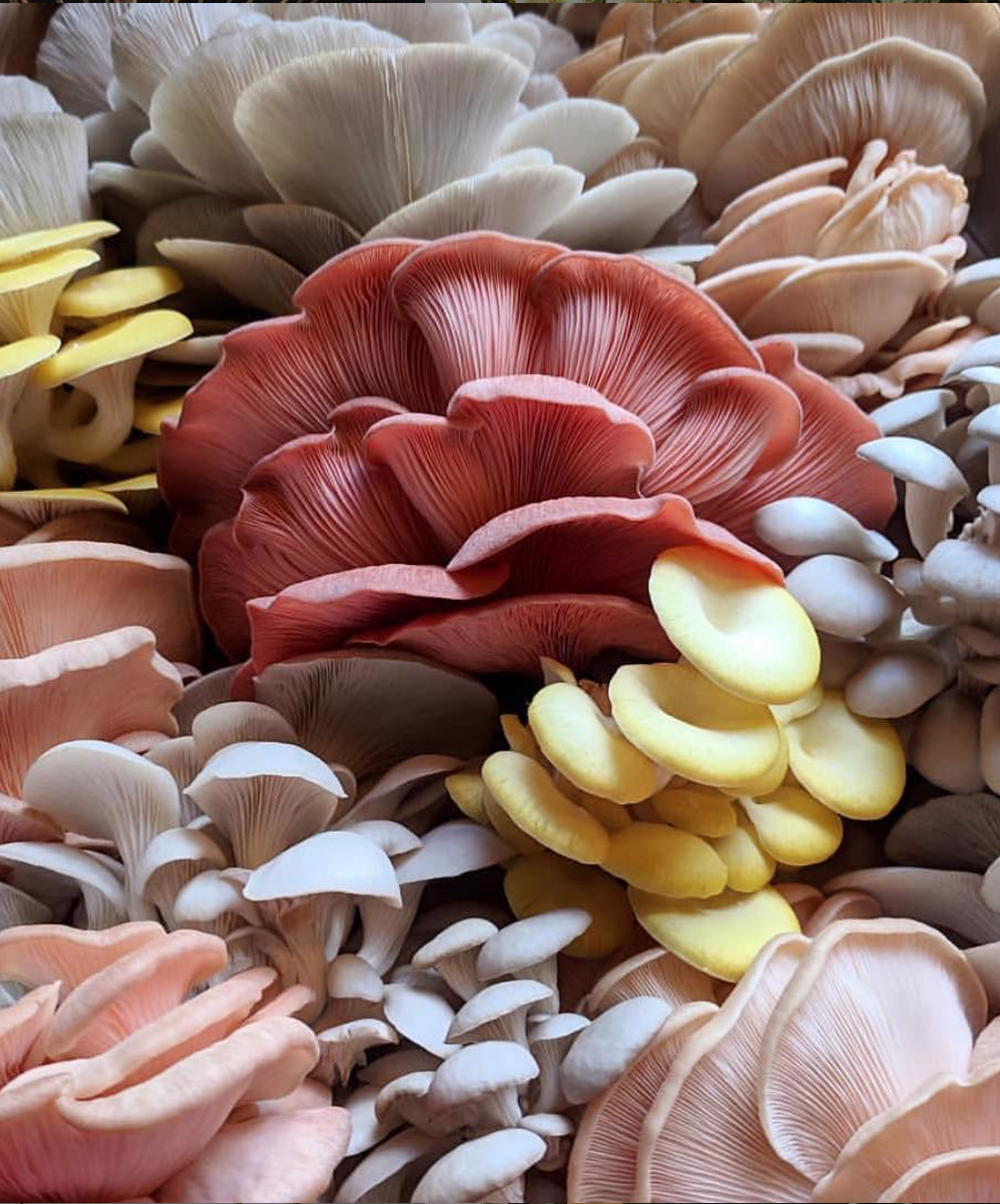 Are mushrooms the new flowers - Eclectic Trends