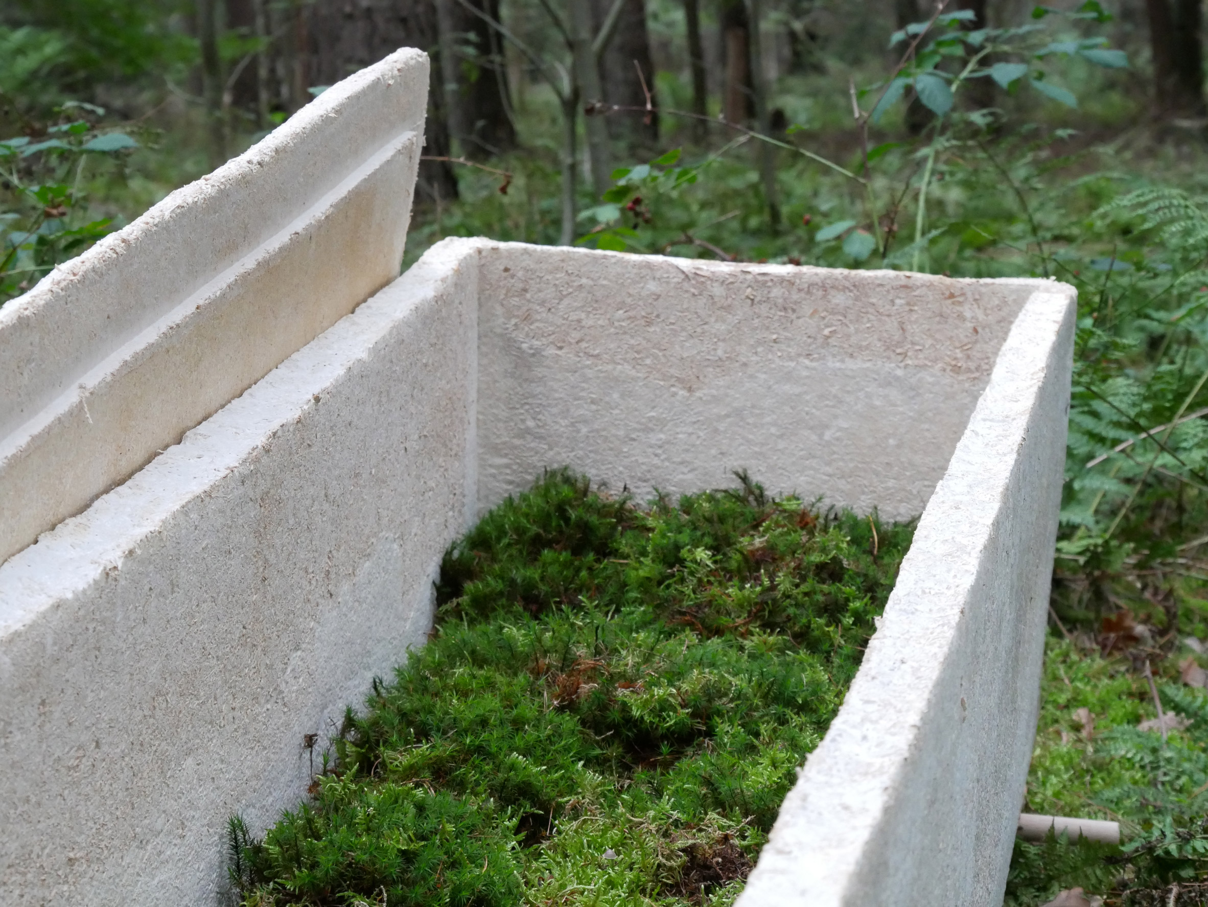 Mycelium mushroom grows into a living coffin